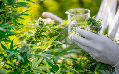 Is Excluding Medical Marijuana From Benefits Coverage Discriminatory Under Human Rights Law?